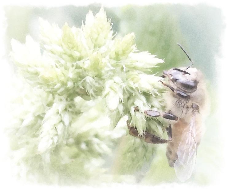 honeybee on Callaloo watercolor